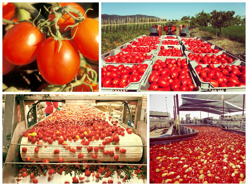 tomatoprocessingplant.jpg